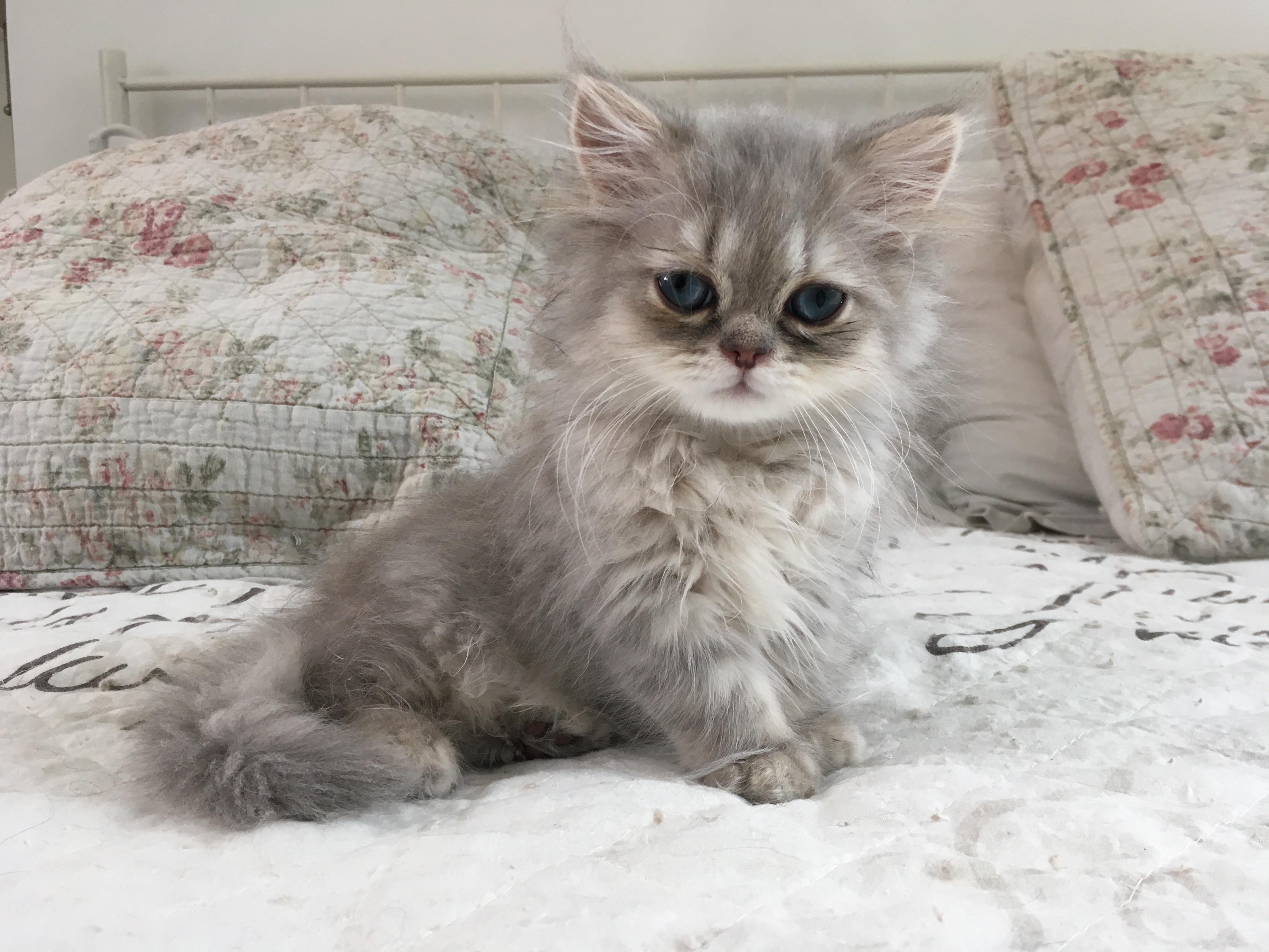 3 mois