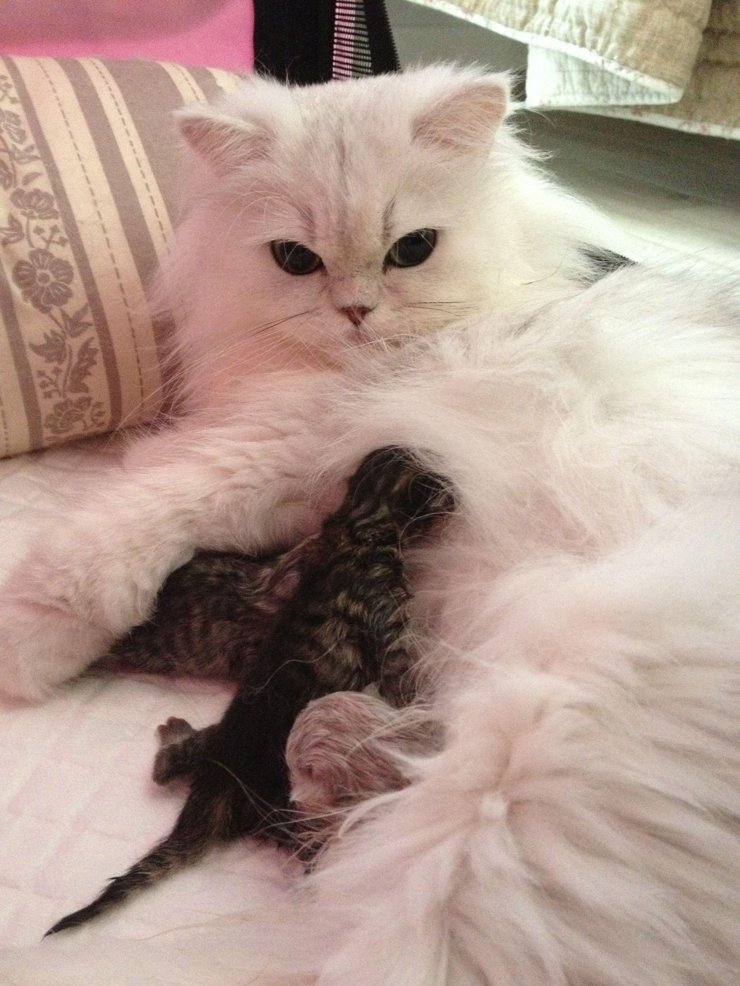 _Evangéline + chatons-naissance-3.jpg