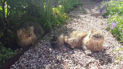 Lexy et Leeloo, 1 an