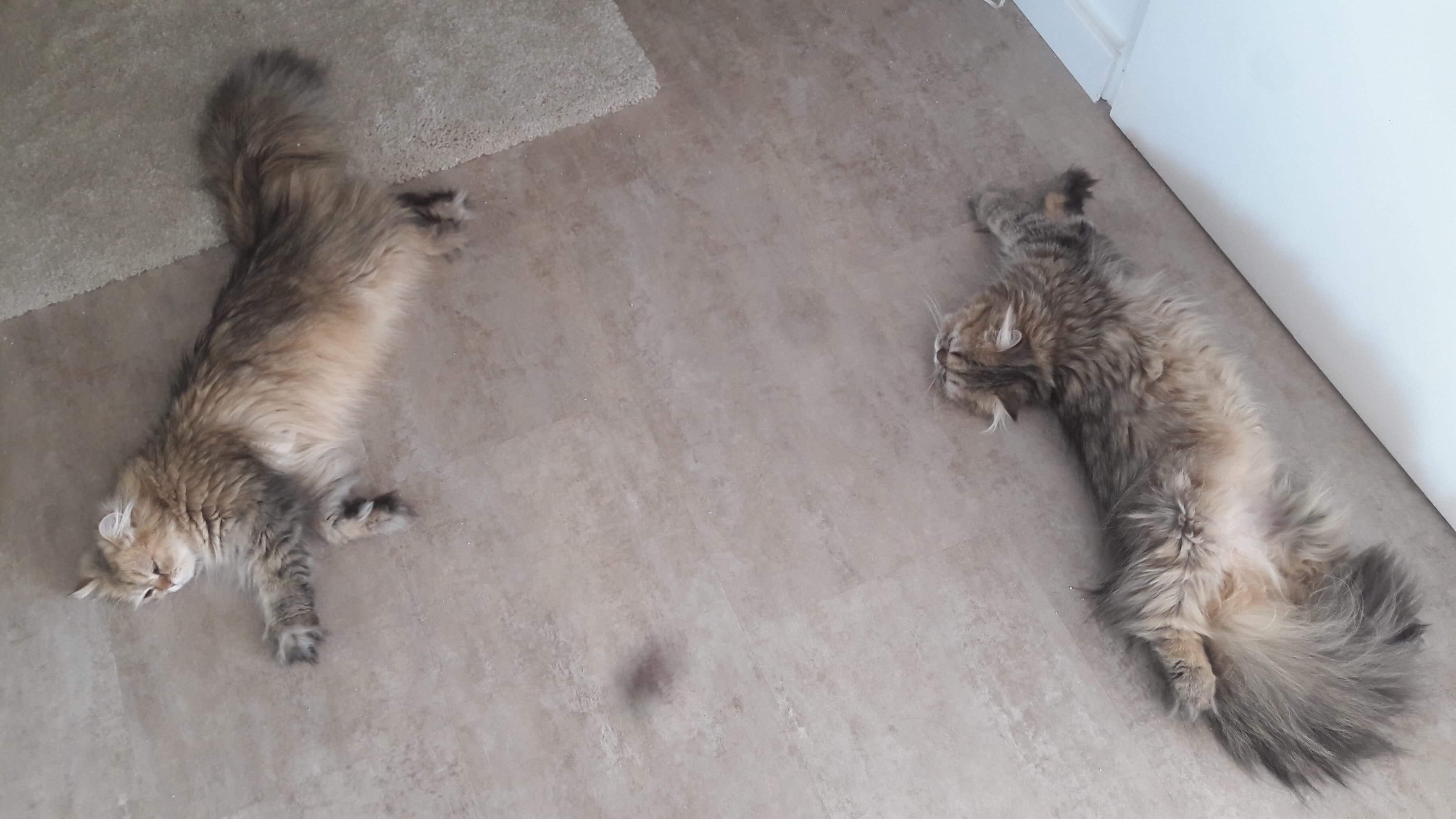 Nayouki et Nouko, 1 an