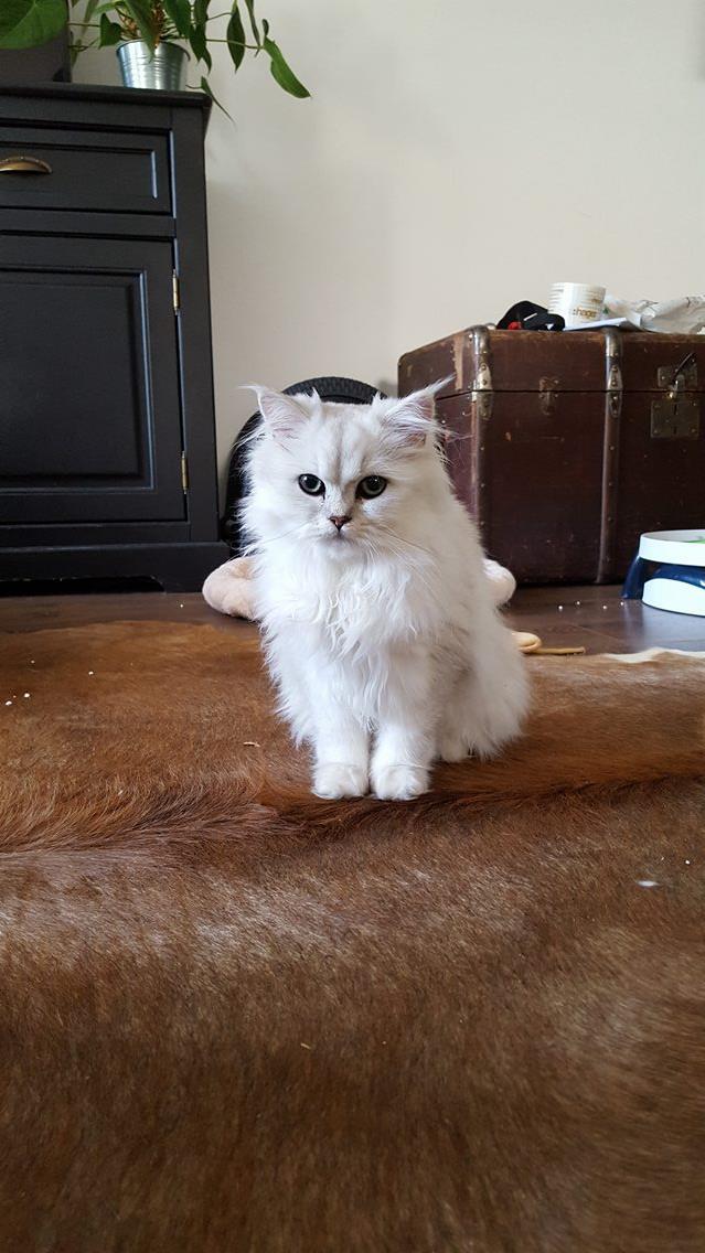 Maïa, 6 mois