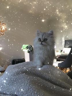 Totoro, 3 mois