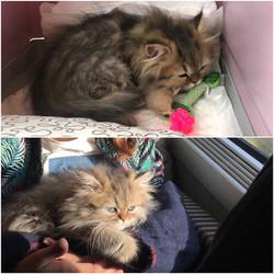 Nell, 3 mois