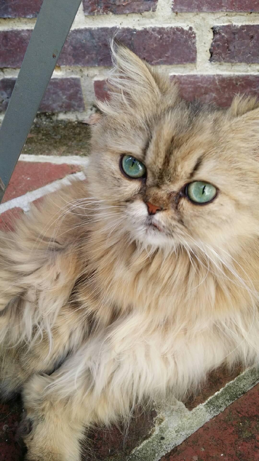 Leeloo, 1 an