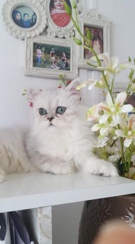 Ophélie, 5 mois