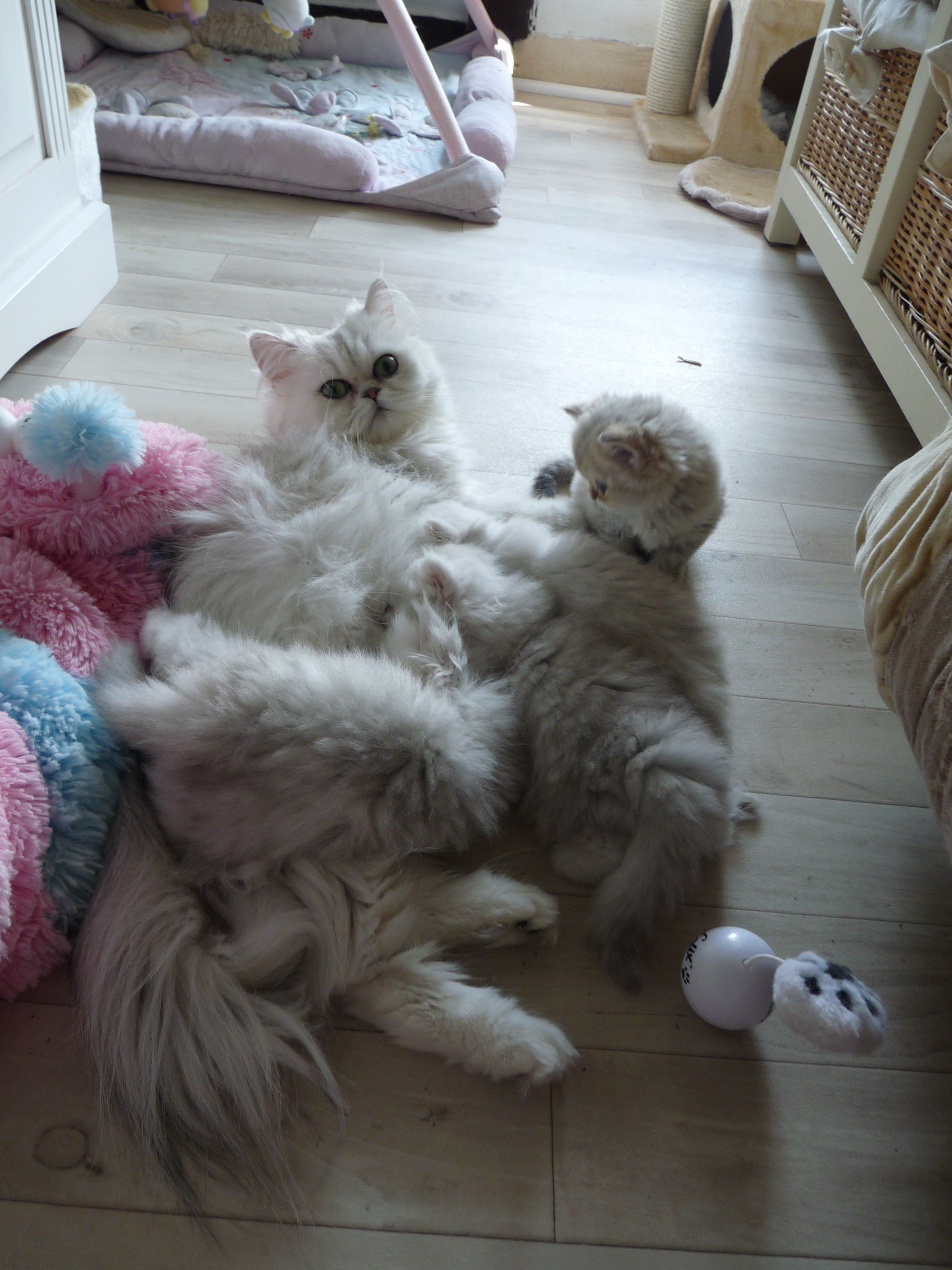 _Elyzabeth + chatons-9semaines-2.jpg