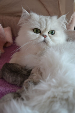 _Elyzabeth + chatons-5jours-7.jpg