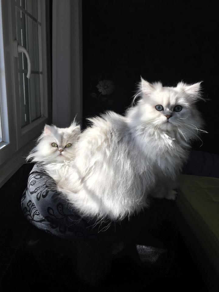Ladislas, 7 mois et Jade, 1 an