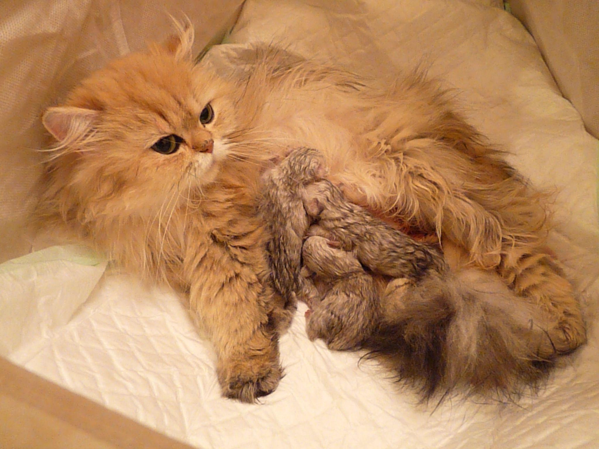 _Douchka + chatons-naissance-3.jpg