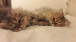 Nouko et Nayouki, 4 mois