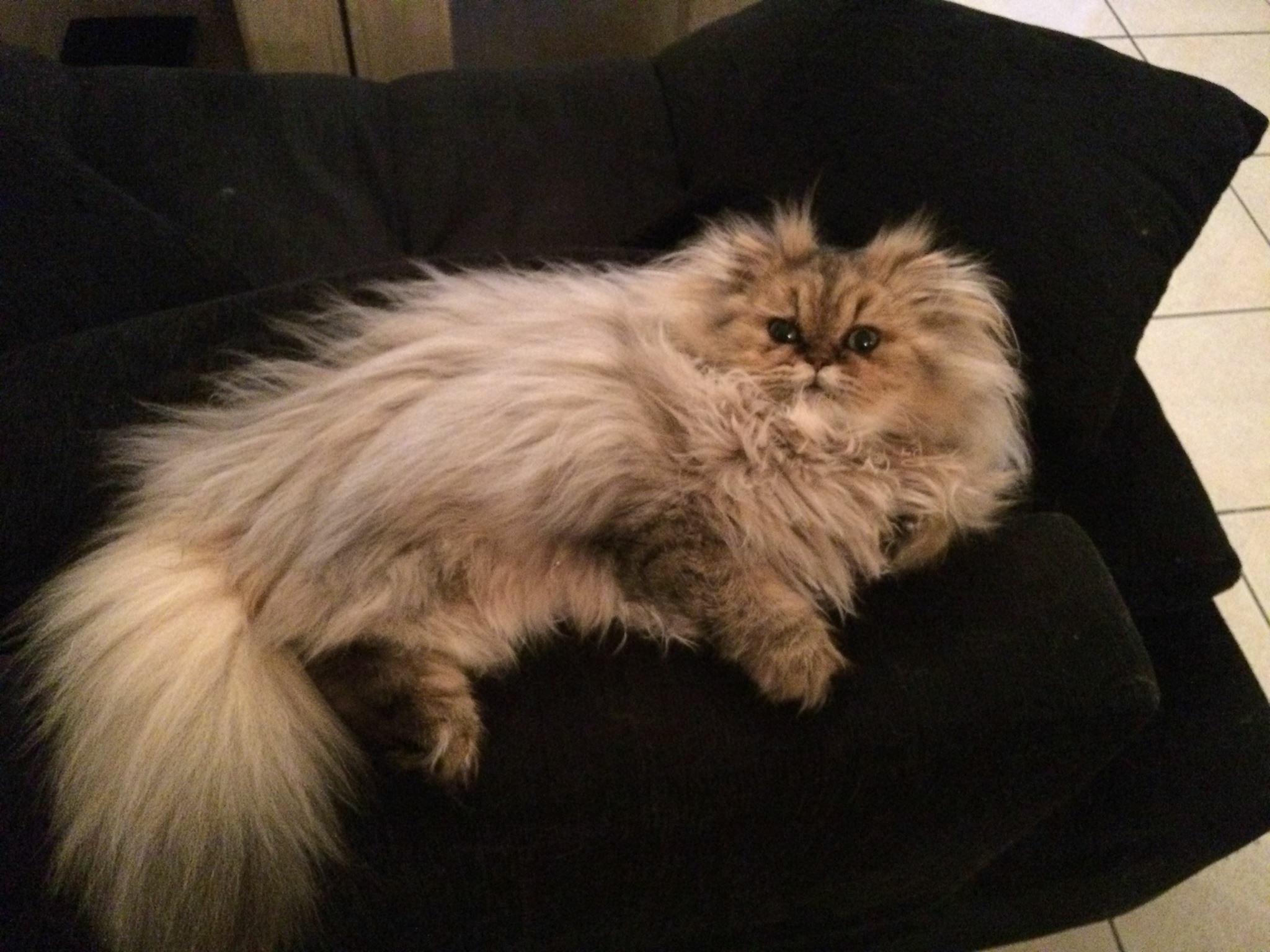 Lili-Rose, 6 mois