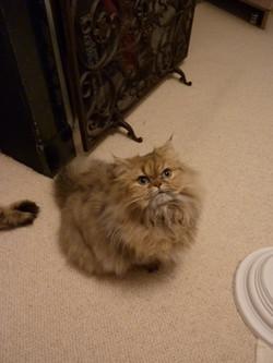 Leeloo, 8 mois
