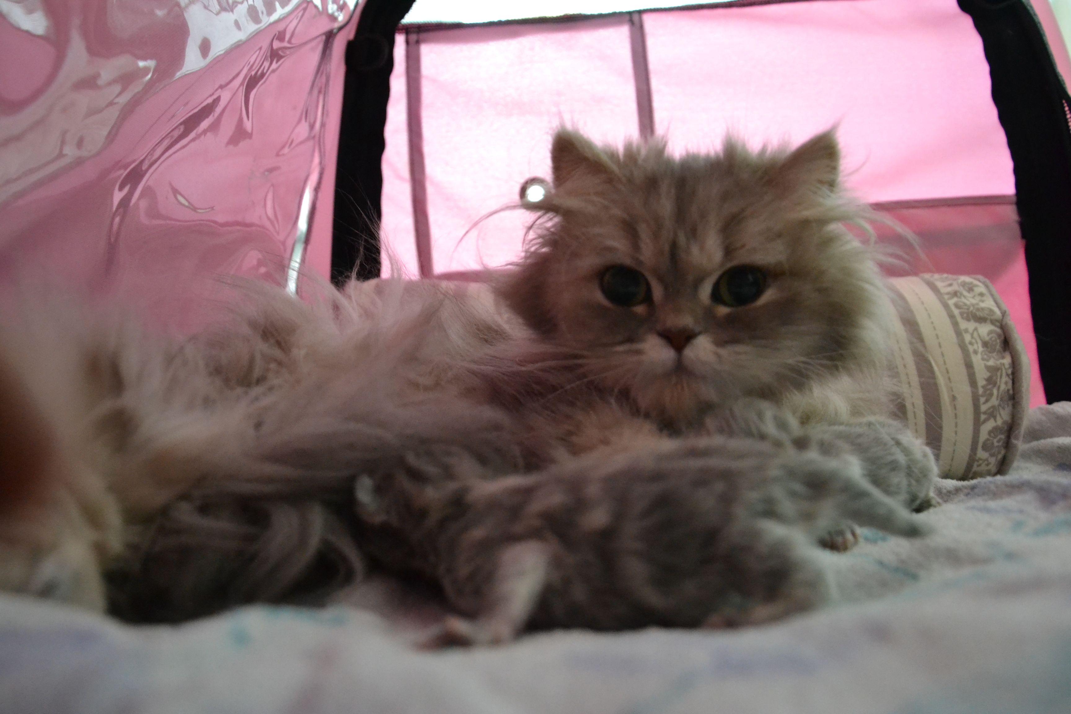 _Héra + chatons-1jour-9.jpg