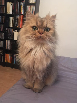 Nugget, 3 ans