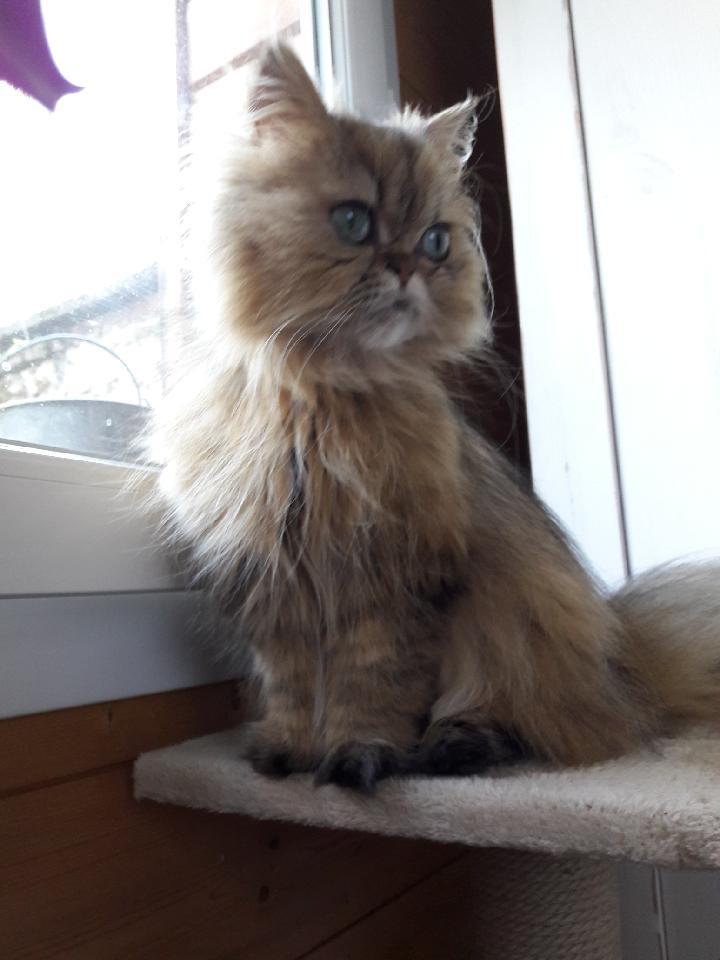 Leeloo, 3 ans