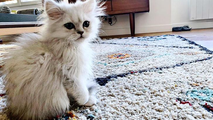 Phoebe, 3 mois