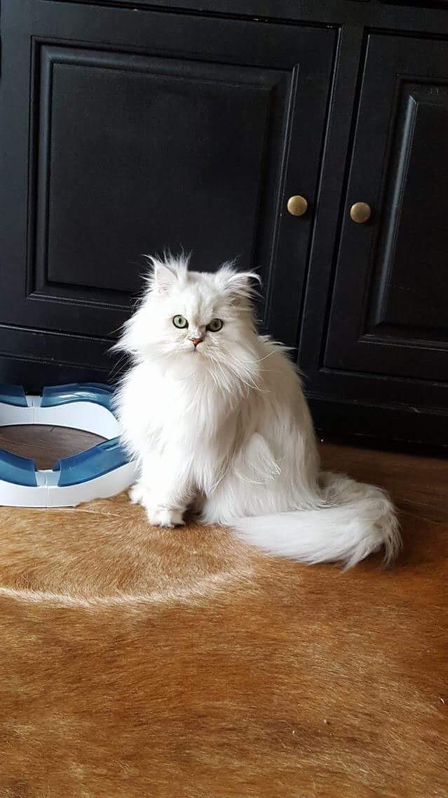 Maïa, 1 an