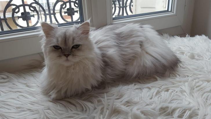 Phoebe, 1 an