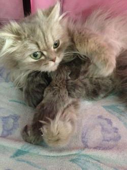 Héra + chatons-1jour.jpg