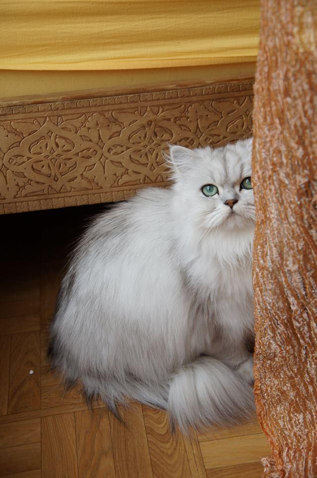 Hélios,  2 ans