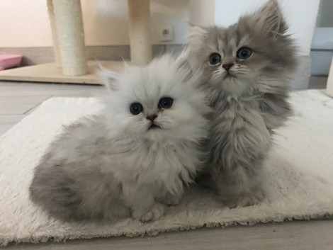 Perla-2mois + Phoebe-1mois.jpg