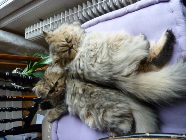 Lexy et Leeloo, 8 mois