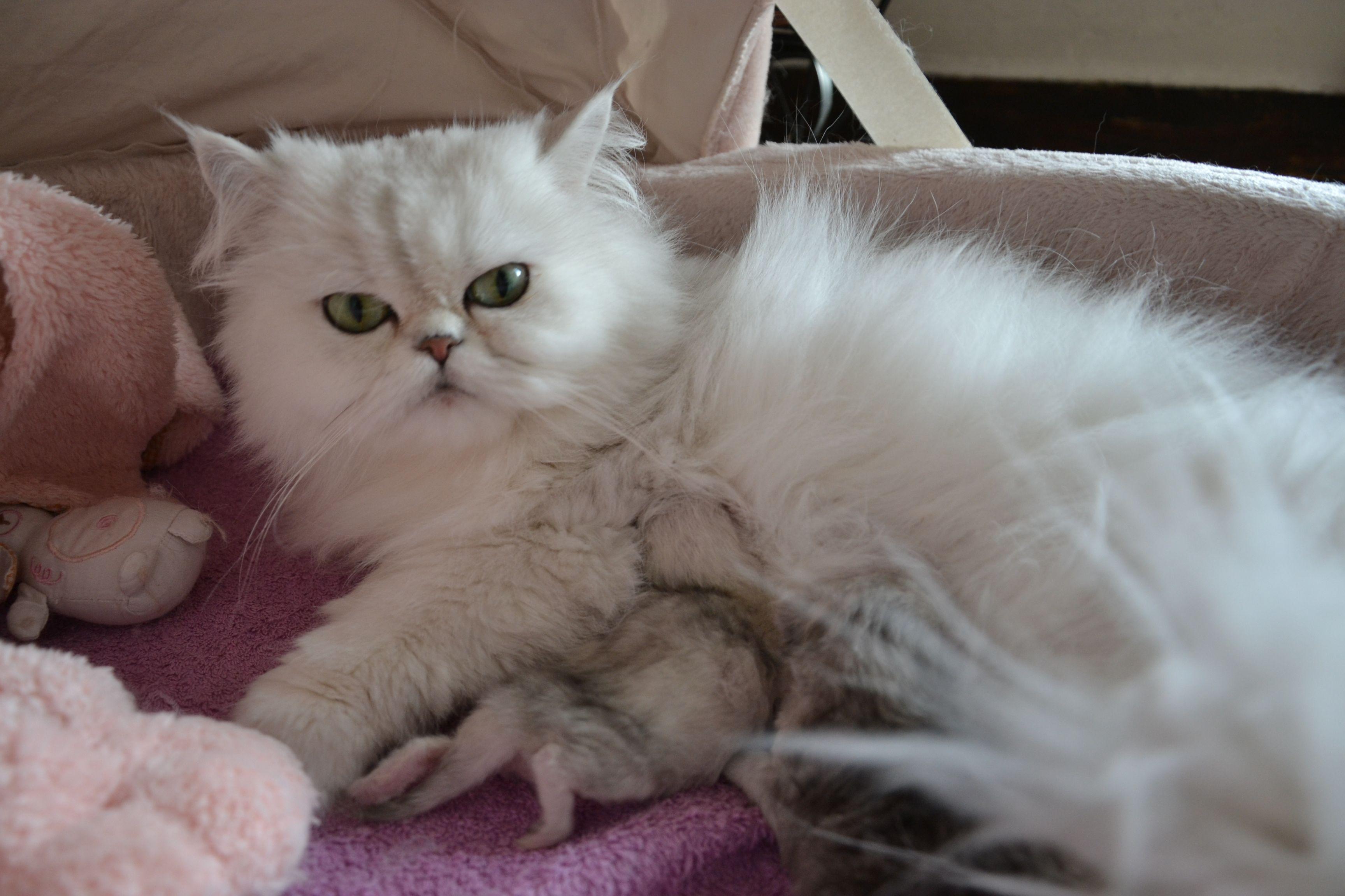 _Elyzabeth + chatons-5jours.jpg