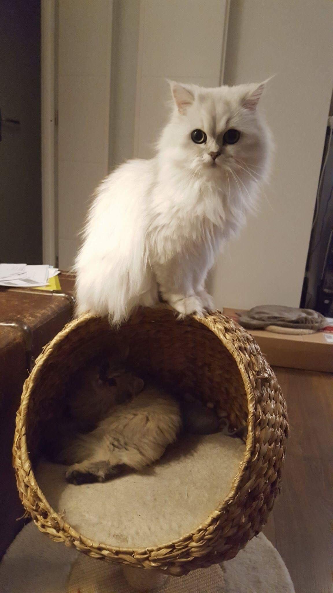 Maia, 1 an + Noisette, 6 mois