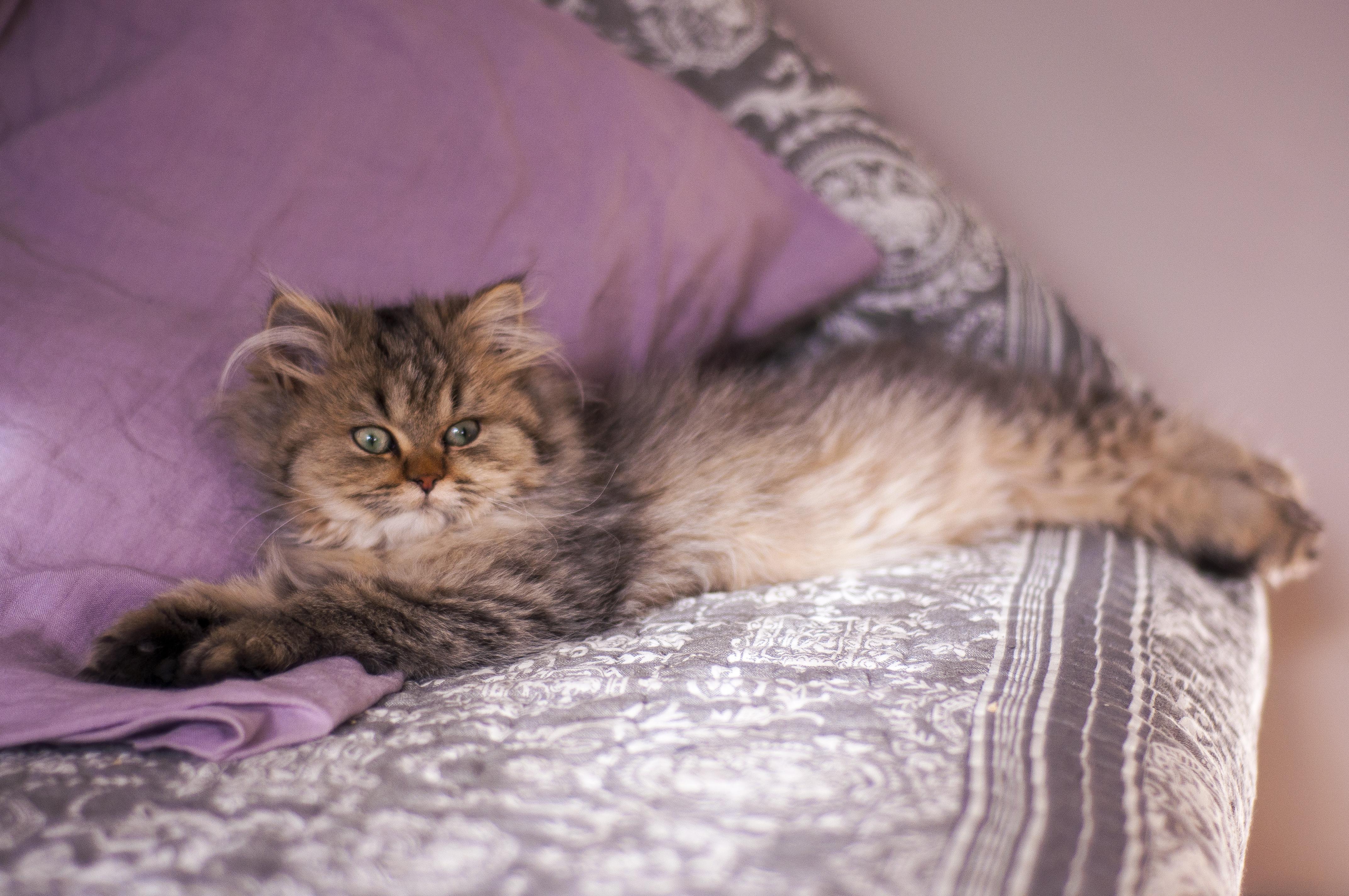 Juno, 4 mois