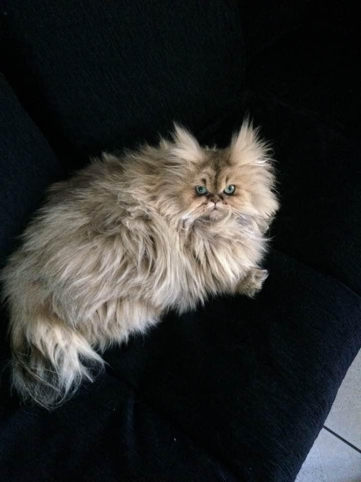 Lili-Rose, 1 an