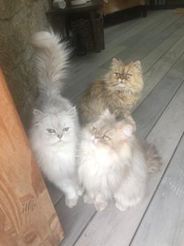 Onyx, Orion, 2 ans et Perle, 1an