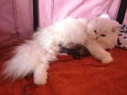 _Eurydice + chatons-naissance-8.jpg