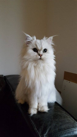 Maïa, 8 mois