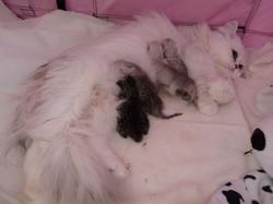 _Elyzabeth + chatons-naissance-3.jpg