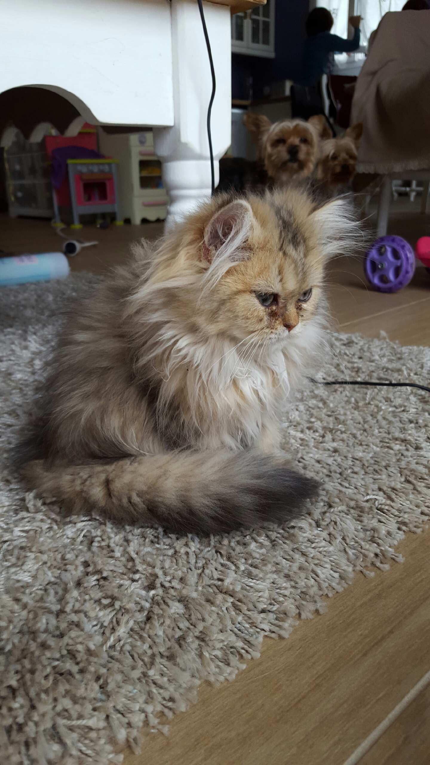 Mélusine, 4 mois