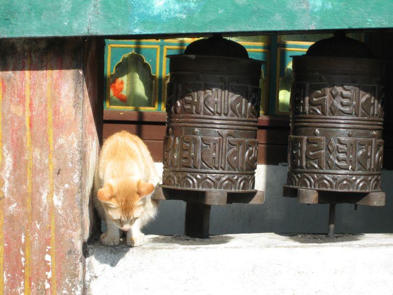 Bhutan (5).jpg