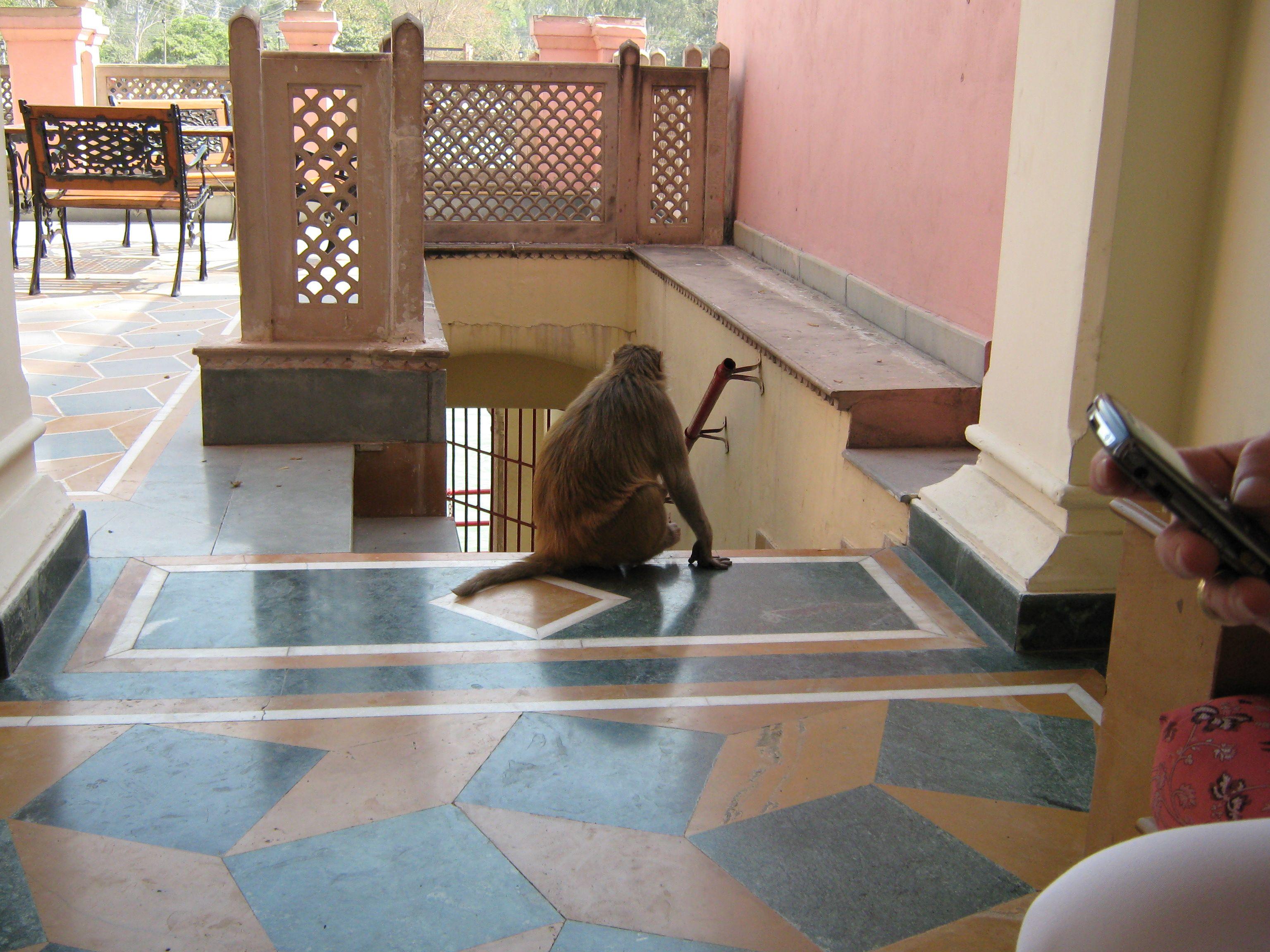 Indien (21).jpg