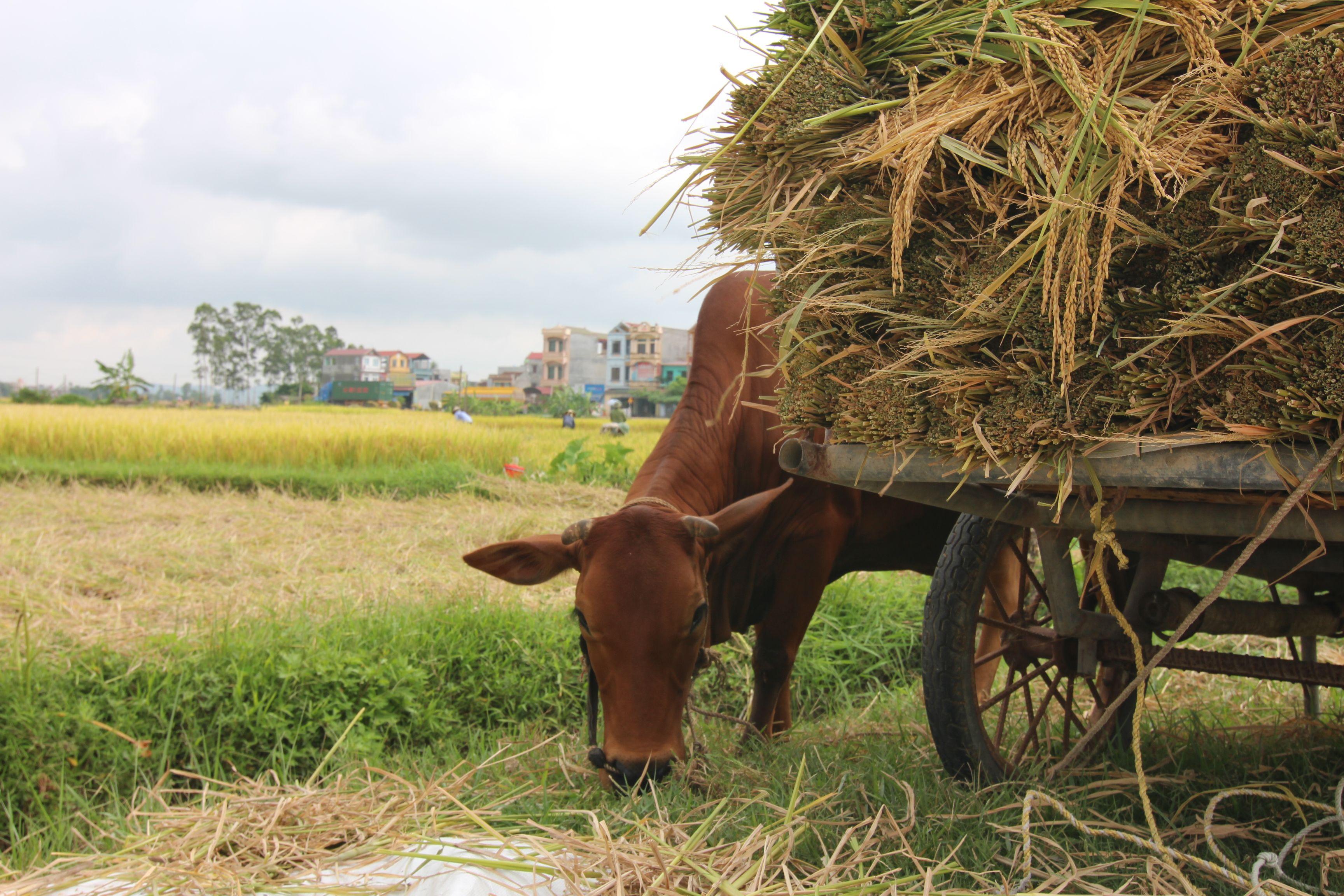 Vietnam (13).jpg