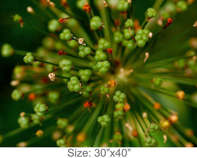 MC39_30x40.jpg