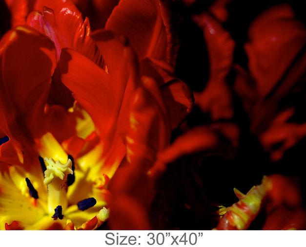MC43_30x40.jpg