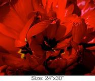 MC32_24x30.jpg