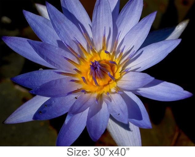 MC27_30x40.jpg