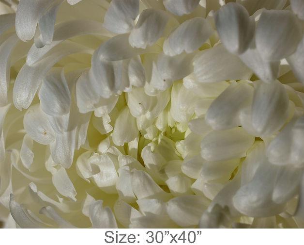 MC36_30x40.jpg