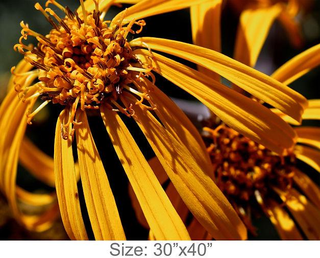 MC37_30x40.jpg