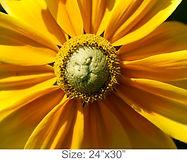 MC29_24x30.jpg