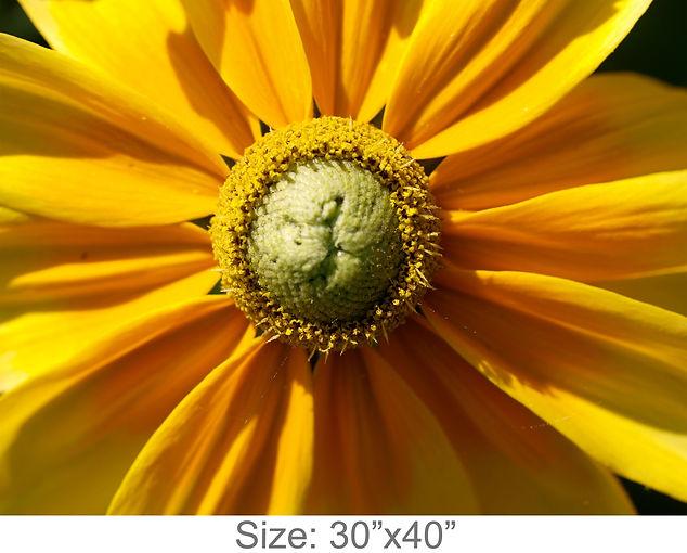 MC29_30x40.jpg