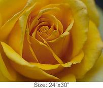 MC42_24x30.jpg