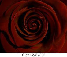 MC52_24x30.jpg