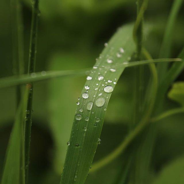 A walk in the rain!! Taunton canal!!!.jp