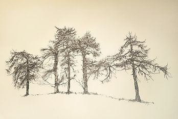 drawing of trees, pencil drawing, tree drawing, bare trees, pencil, trees, jenny fox